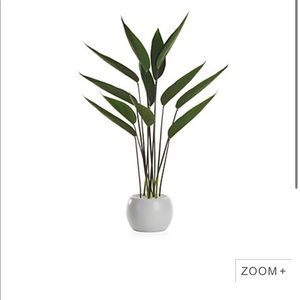 Z Gallerie Faux Potted Water Canna